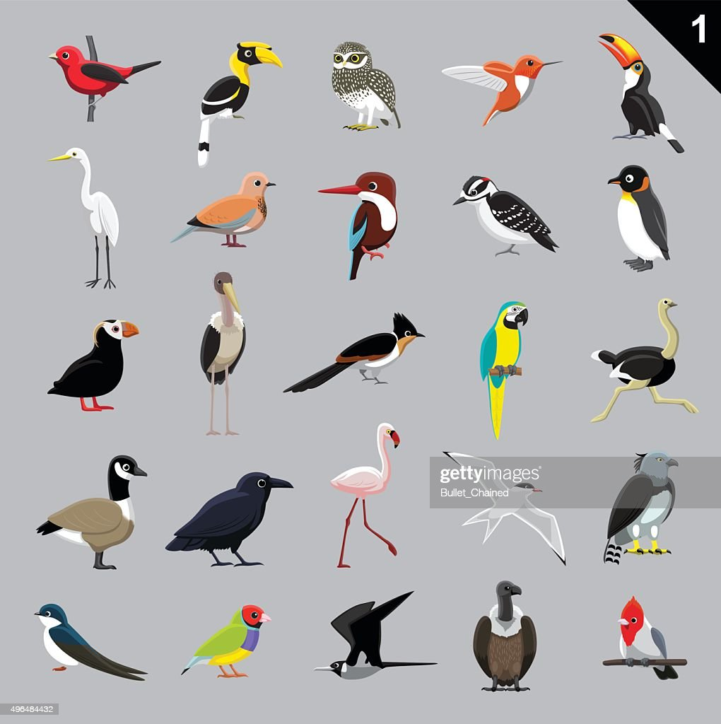 Various Birds Cartoon Vector Illustration 1
