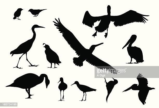 various birds vector silhouette - pelican stock illustrations
