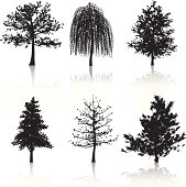Various black tree silhouettes with reflections