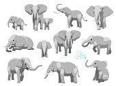 Various Elephant Poses Cartoon Vector Illustration