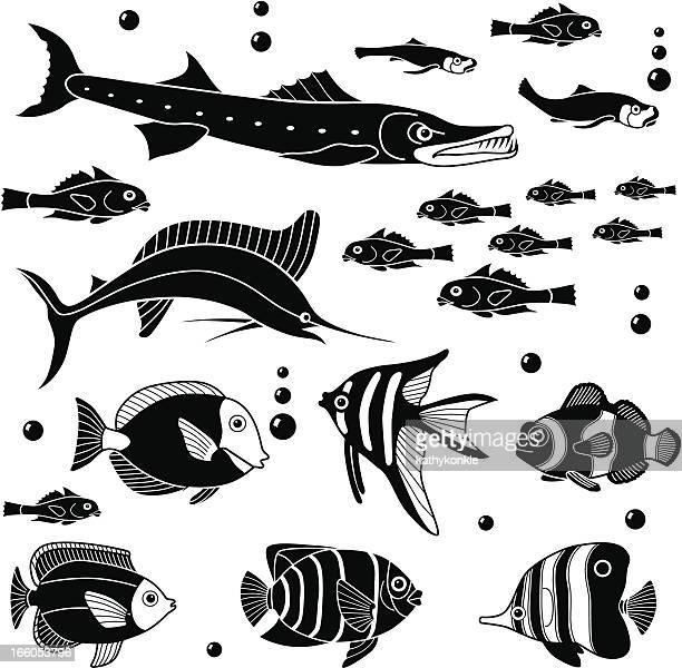 various fish - acanthuridae stock illustrations, clip art, cartoons, & icons