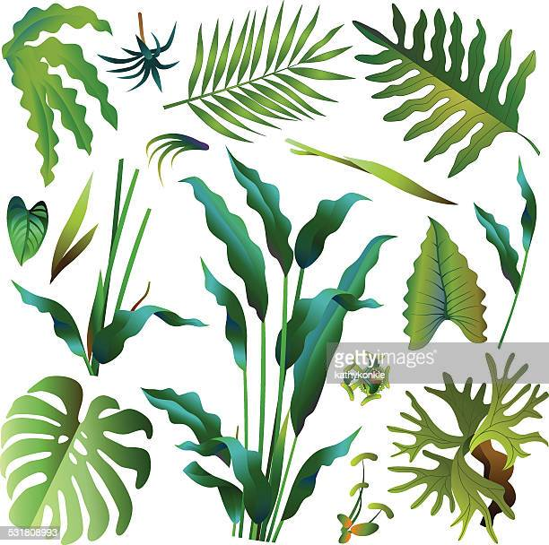 various green tropical rainforest leaves - tropical bush stock illustrations