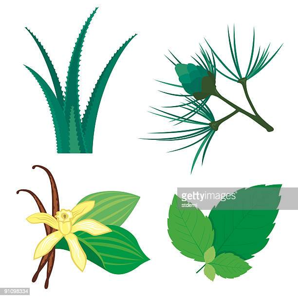 various illustrated plant ingredients - mint leaf culinary stock illustrations, clip art, cartoons, & icons