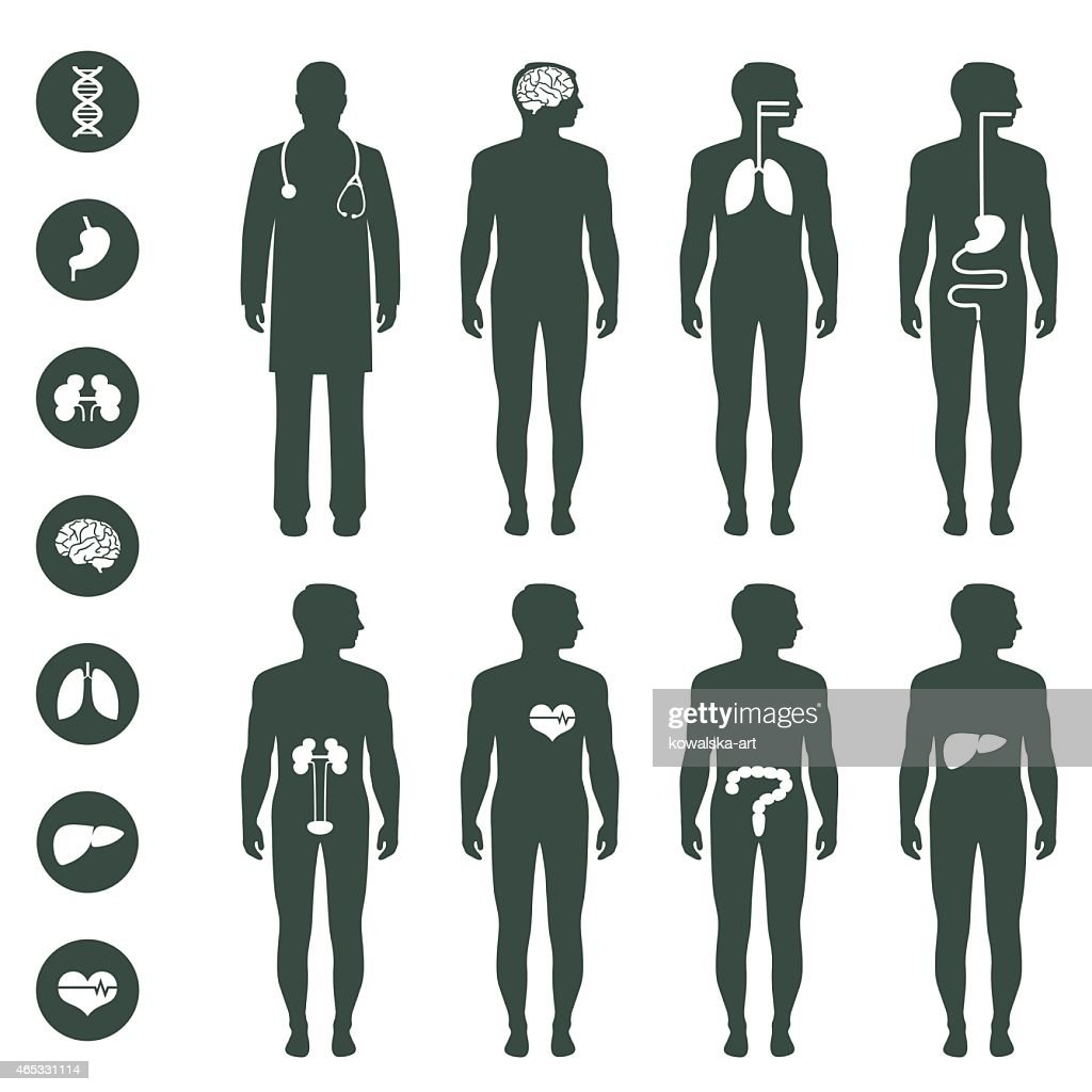 Various Illustrations Of Human Body Anatomy Vector Art Getty Images