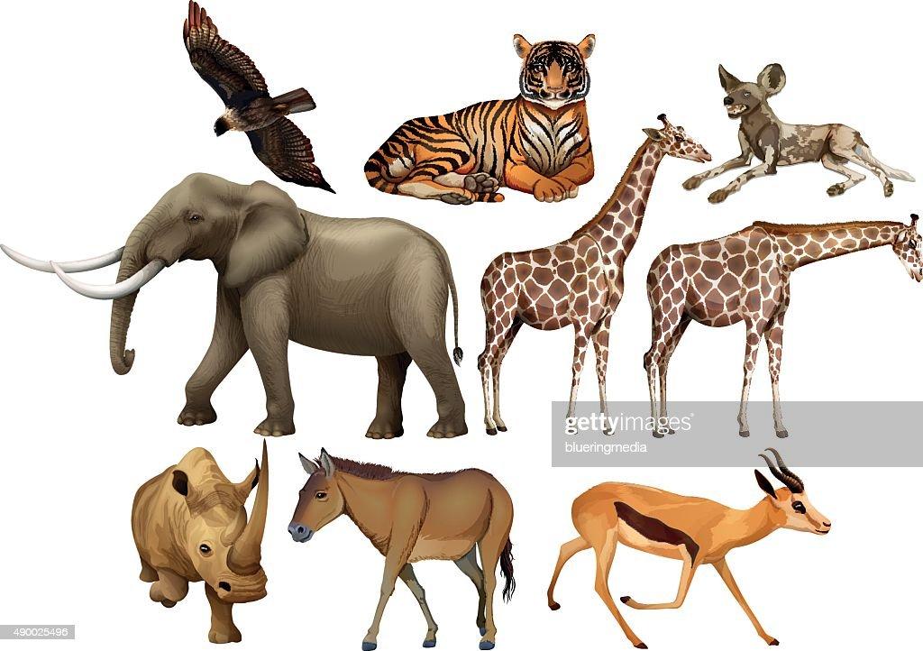 Various kind  wild animals