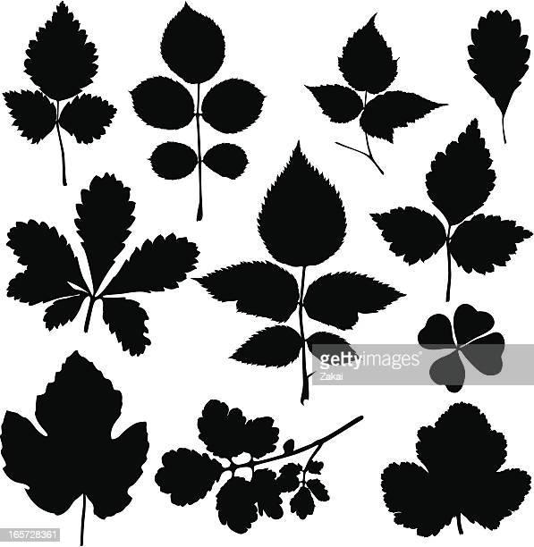 Negro siluetas de varias hojas
