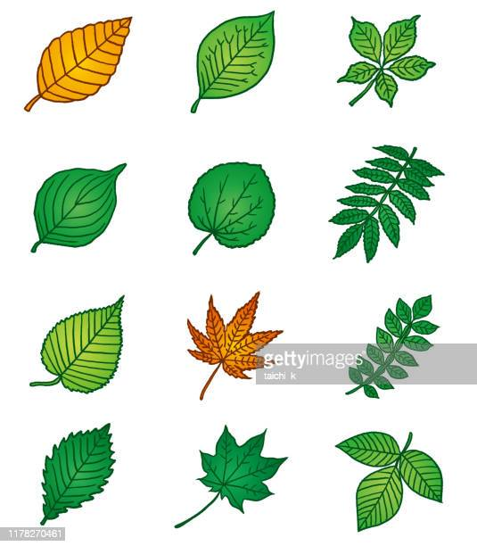 29 Poison Ivy High Res Illustrations Getty Images,Crib Tents Safe
