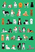 Various Medium Size Dog Breeds Cartoon Vector Illustration