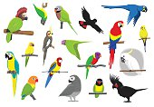 Various Parrots Cartoon Vector Illustration