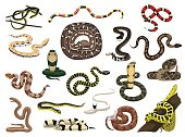 Various Snakes Poses Vector Illustration