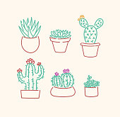 Various succulents cactus types