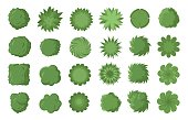 Various trees, bushes and shrubs, top view for landscape design plan. Vector illustration, isolated on white background.