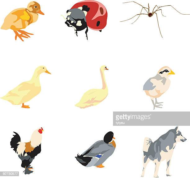 Vector animals