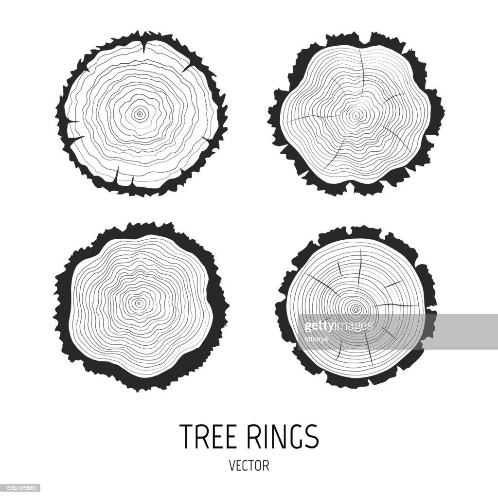 Vector annual tree rings