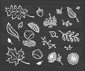 Vector Autumn Harvest symbols. Hand Drawn Doodle Different Tree Leaves, Chestnuts, Flowers and Berries. Happy Thanksgiving Day Greeting card template