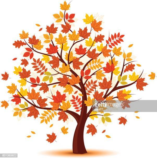 vector autumn tree design - autumn stock illustrations