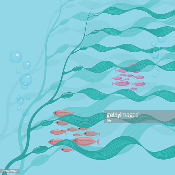 Vector background of seaweed giant kelp underwater