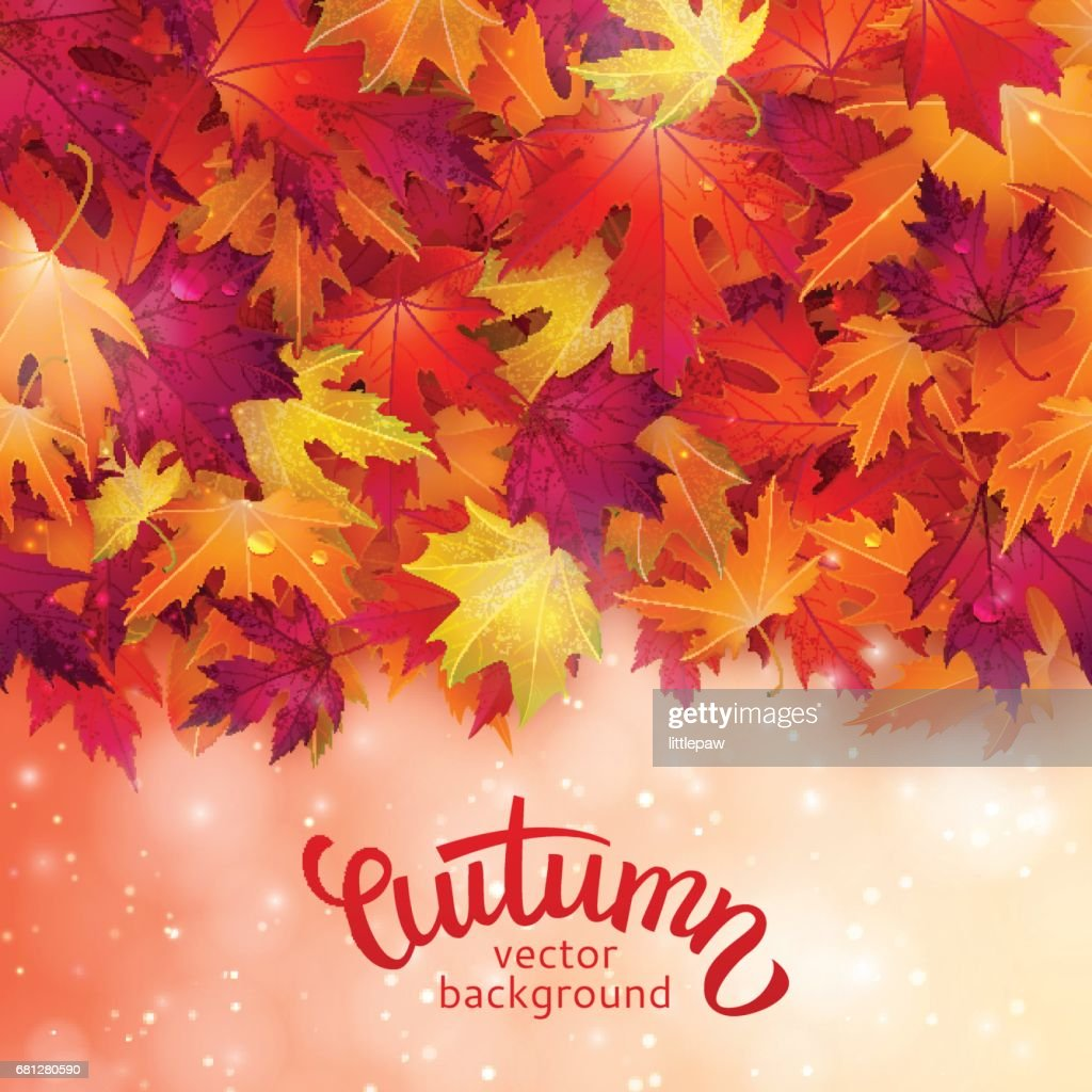 Vector background with colorful autumn leaves, card template, natural backdrop
