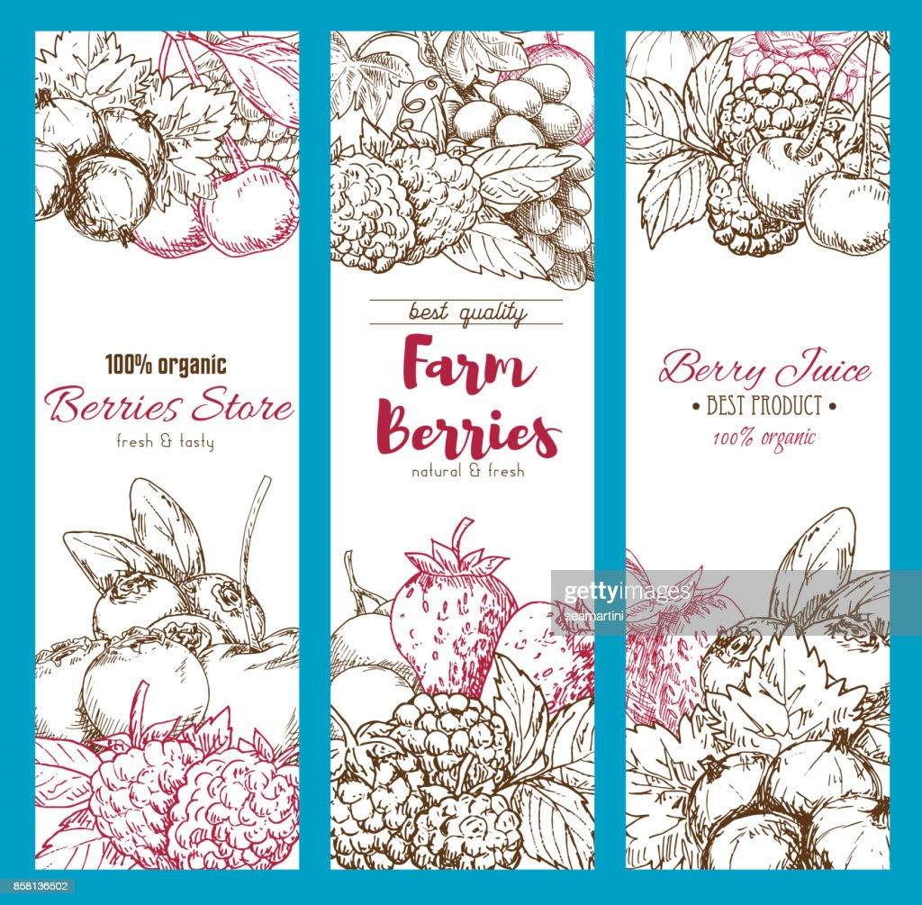 Vector banners of fresh garden berries sketch