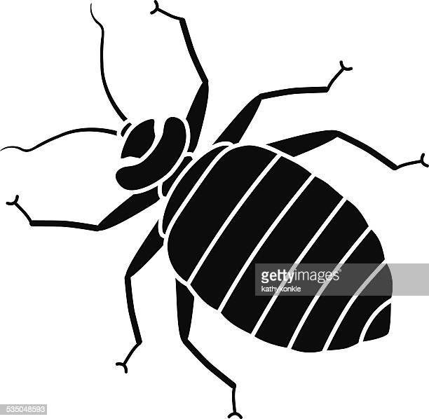 vector bed bug in black and white