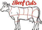 vector beef chart. meat cuts, butcher shop