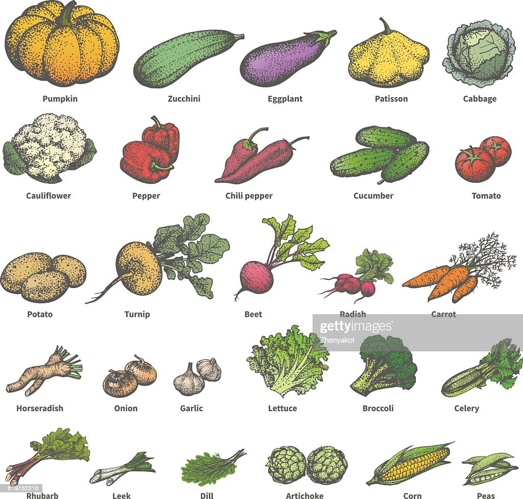 Vector big set different colored ripe vegetables