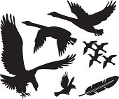 Vector birds - swans, eagle and others