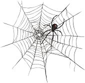 Vector Black Widow Spider on Spider's Web.