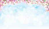 Vector blossoming sakura  background.