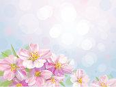 Vector blossoming sakura tree.