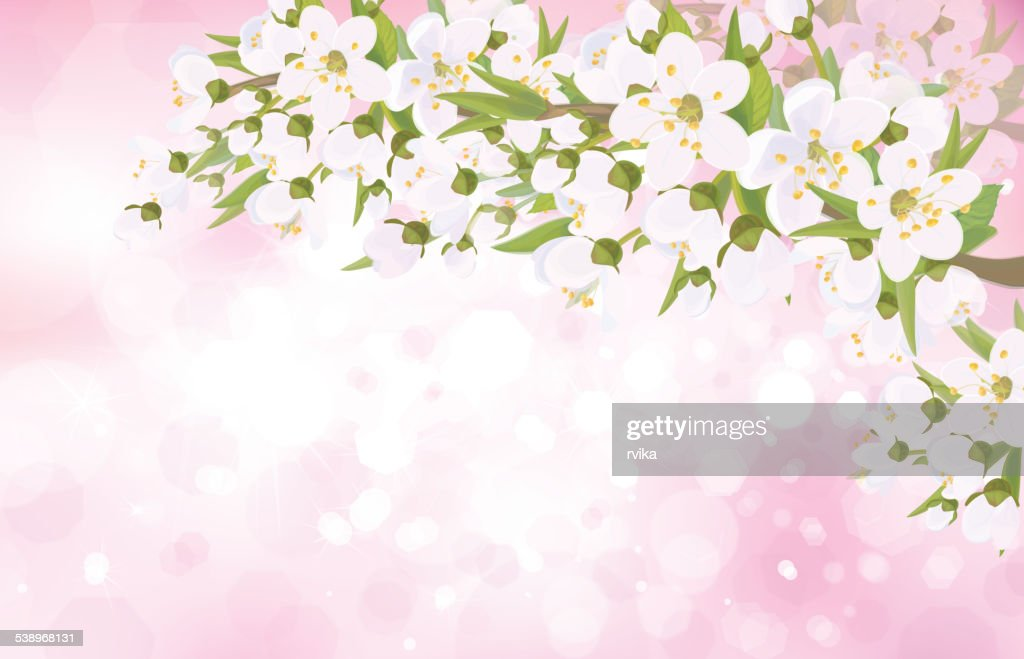 Vector blossoming tree branches on bokeh pink background.