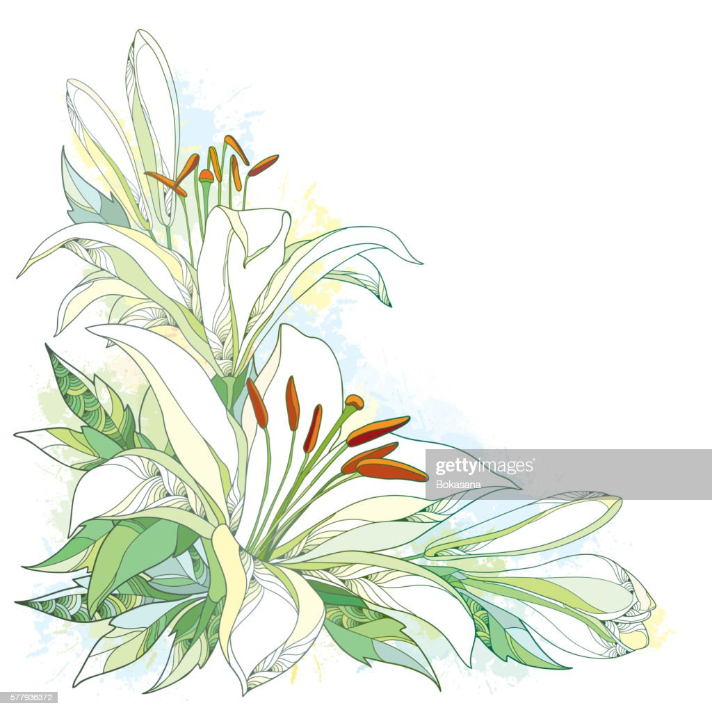 Vector bouquet with ornate white Lily flower, buds and leaves.