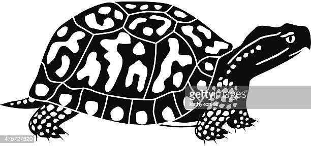 vector box turtle in black and white - box turtle stock illustrations