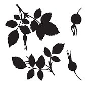 vector branches silhouettes of briar with leaves and berries