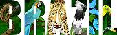 vector Brazil illustration with jaguar, harpy eagle, blue macaw ara, anaconda, blue morpho and toucan