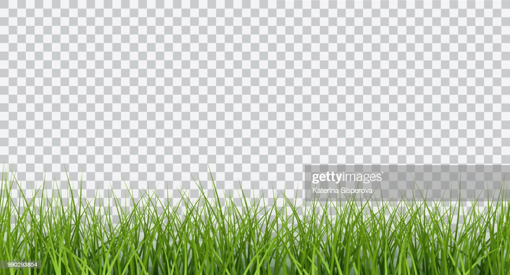 Vector bright green realistic seamless grass border isolated on transparent background