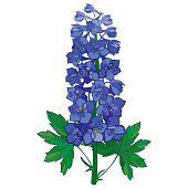 Vector bunch with ornamental blue Delphinium or Larkspur flower isolated on white.