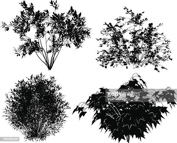 vector bushes. - bush stock illustrations