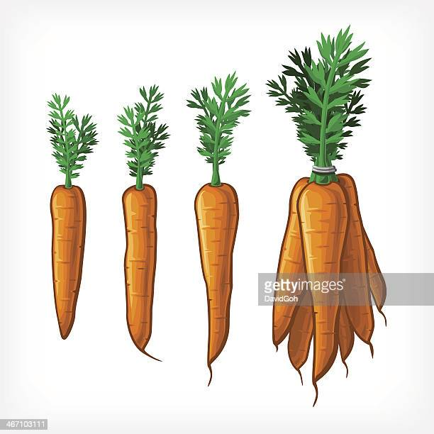 Vektor-Karotten