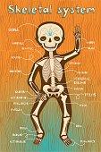 vector cartoon illustration of human skeletal system for kids