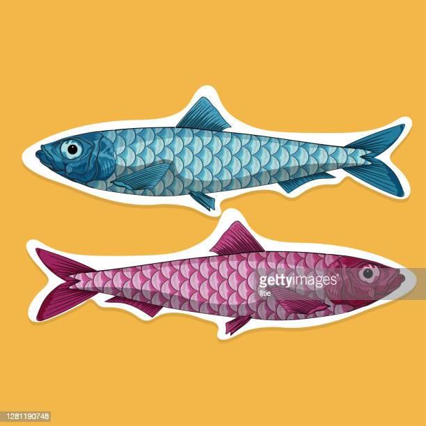 vector cartoon illustration of sardine fish with wood block effect. - sardine stock illustrations