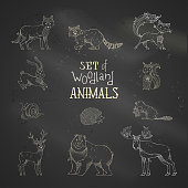 Vector chalk set of wild woodland animals on blackboard background.