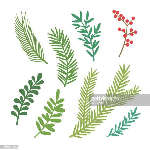 ベクトルクリスマス要素。クリスマスツリーの枝のセット。 - 枝点のイラスト素材/クリップアート素材/マンガ素材/アイコン素材