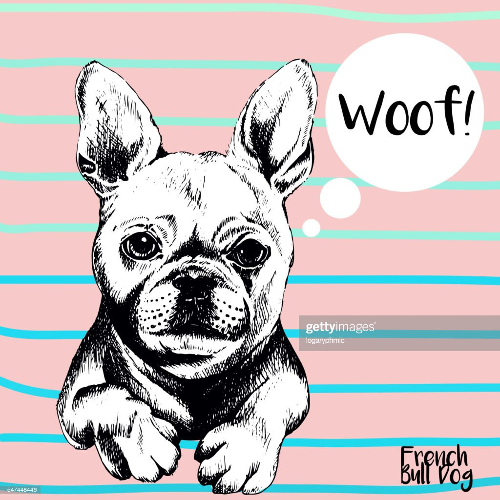 Vector close up portrait of french bulldog.