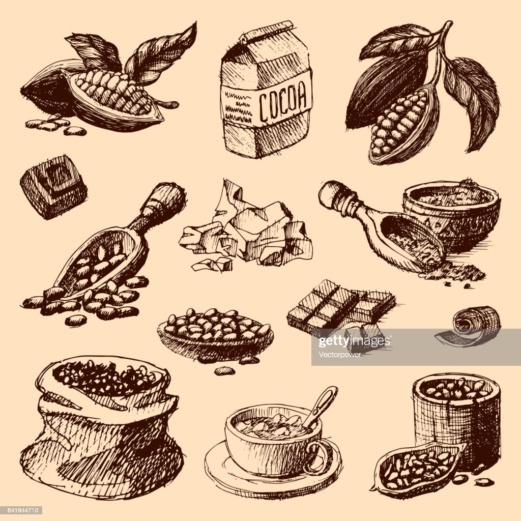 Vector cocoa production hand drawn sketch illustration