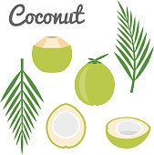 Vector coconut icon