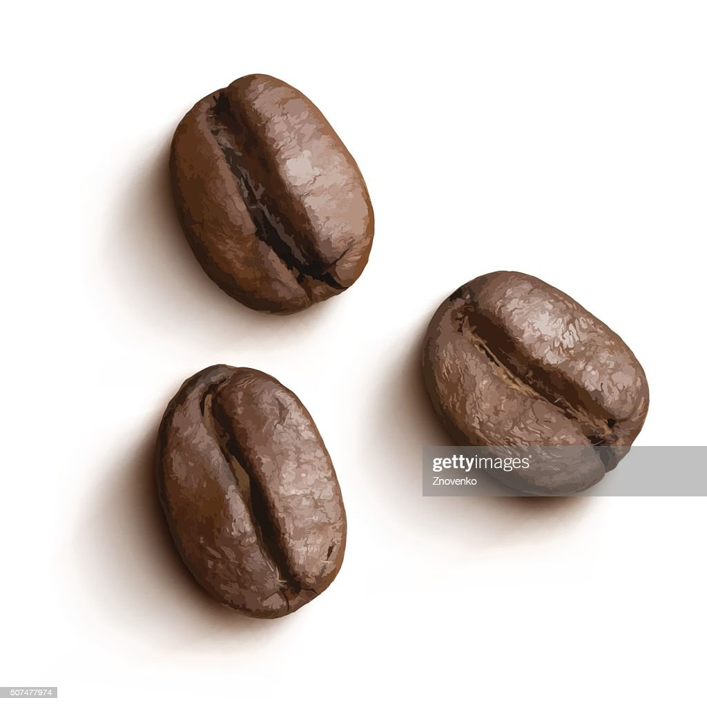 Vector coffee beans isolated.