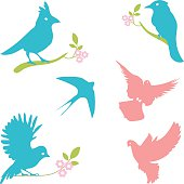 Vector Collection of Bird Silhouettes, colored silhouettes.