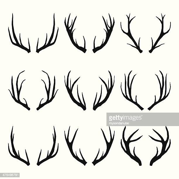 vector collection of deer horns - antler stock illustrations