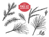 Vector collection of hand drawn black and white pine branch, spruce, redwood
